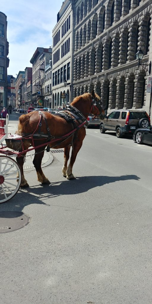 A horse pulling the cart showing the relationship between serving others.